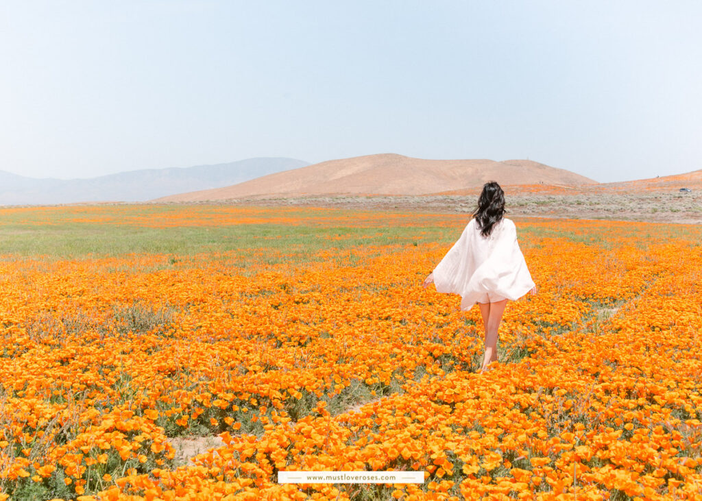 Poppy Fields of the Superbloom at Antelope Valley in Southern California