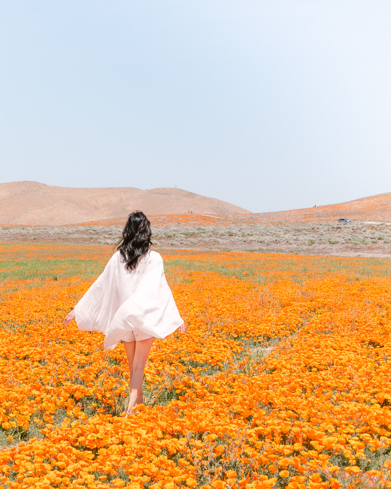 Superbloom Poppy Fields at Antelope Valley in Southern California