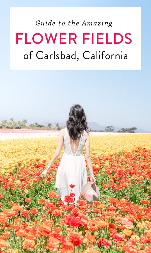 The Flower Fields of Carlsbad in Southern California