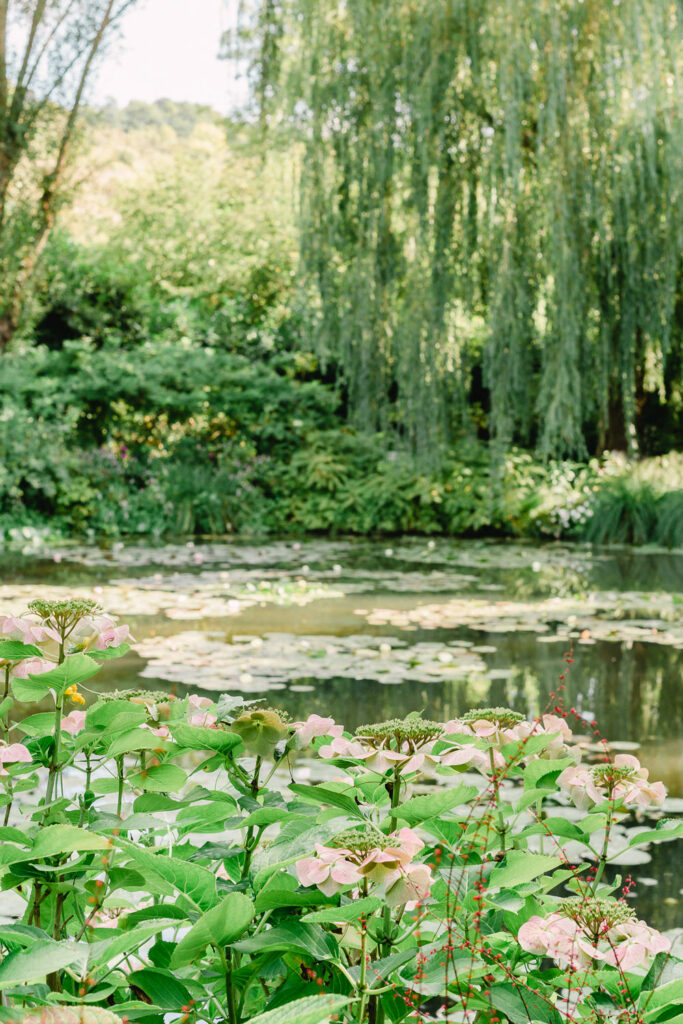 Japanese Pond in Monet's Garden in Giverny France