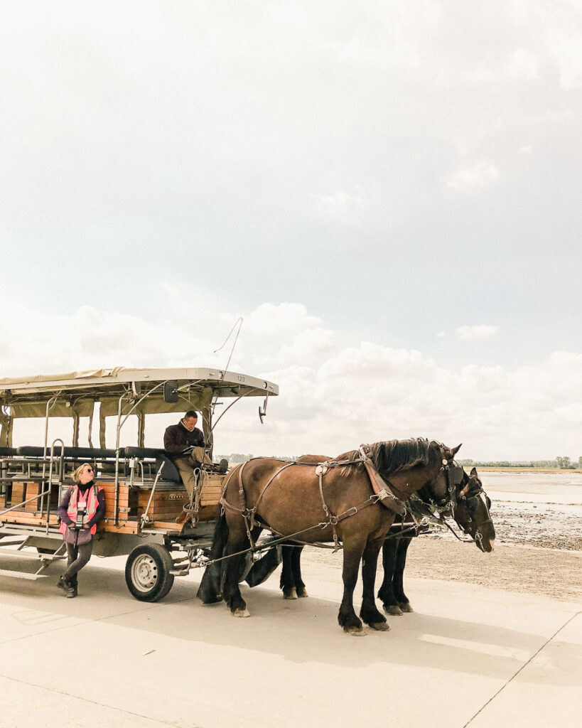 Mont St Michel Horse Drawn Carriage