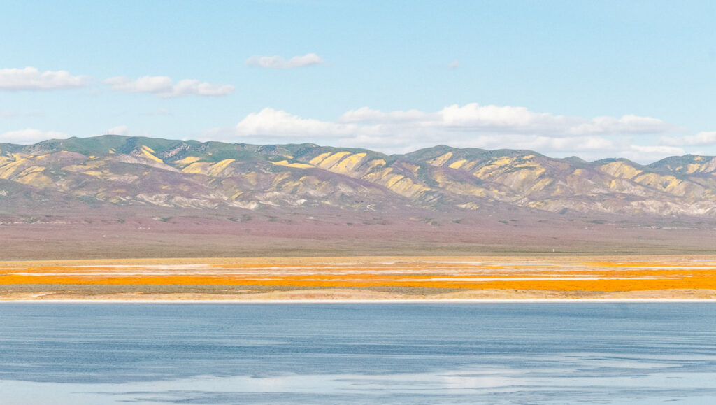 Mountains and fields covered with orange and yellow wildflowers at the Carrizo Plain