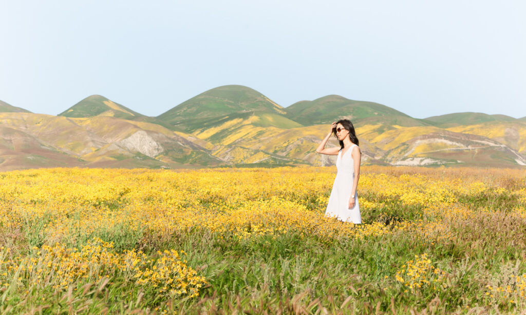 Field of yellow wildflowers at the Carrizo Plain