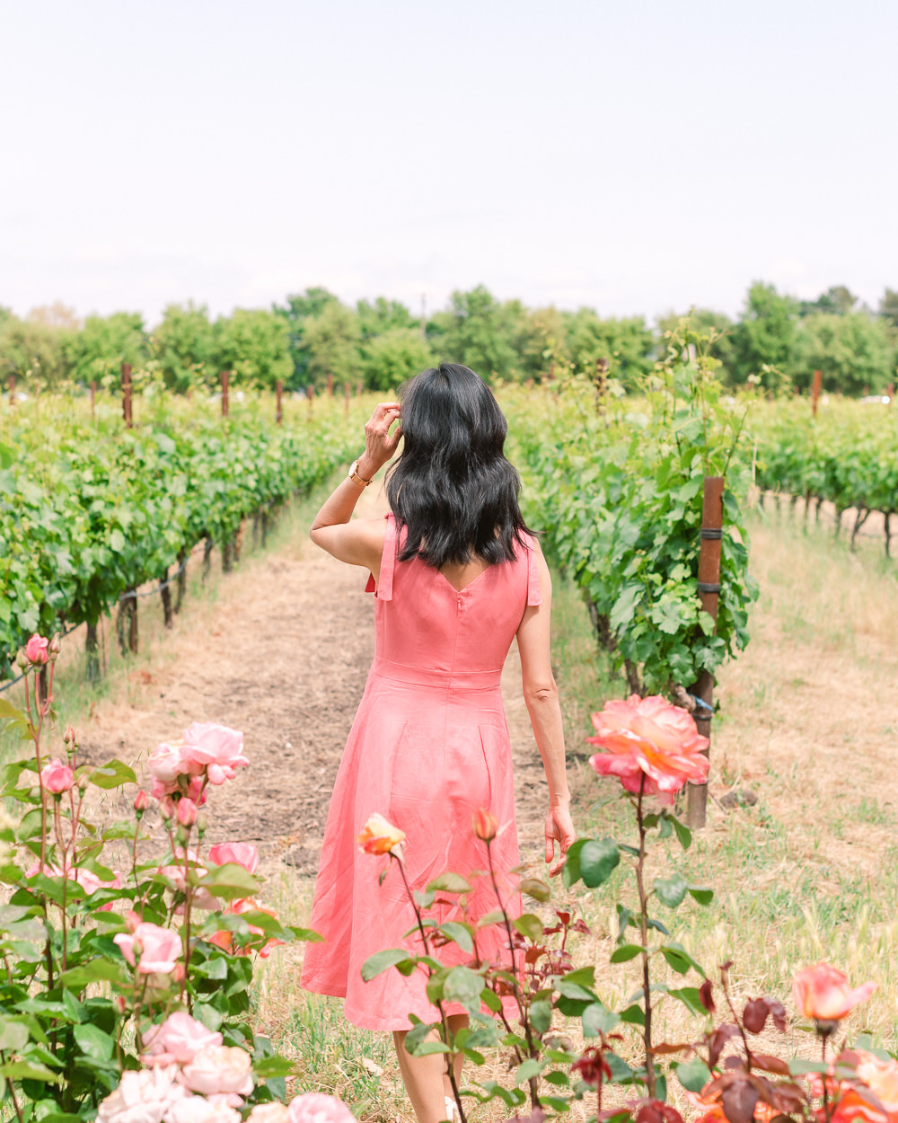 Beautiful Sonoma Vineyard with Rose Garden