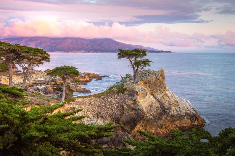 Susan Taylor Lone Cypress