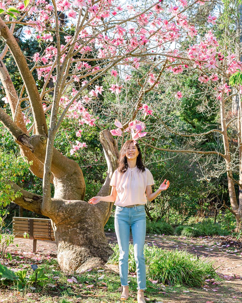 Magnificent Magnolias at the San Francisco Botanical Garden