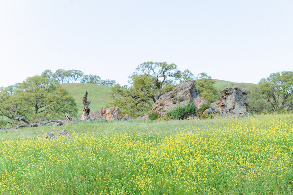 Spring scene of greenery, trees and wildflowers at Mt Diablo State Park in the San Francisco Bay Area in Northern California