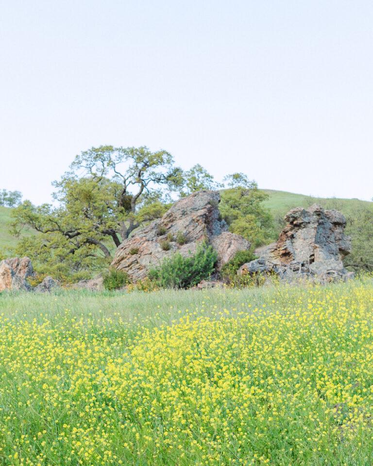 Mt Diablo Spring Wildflowers