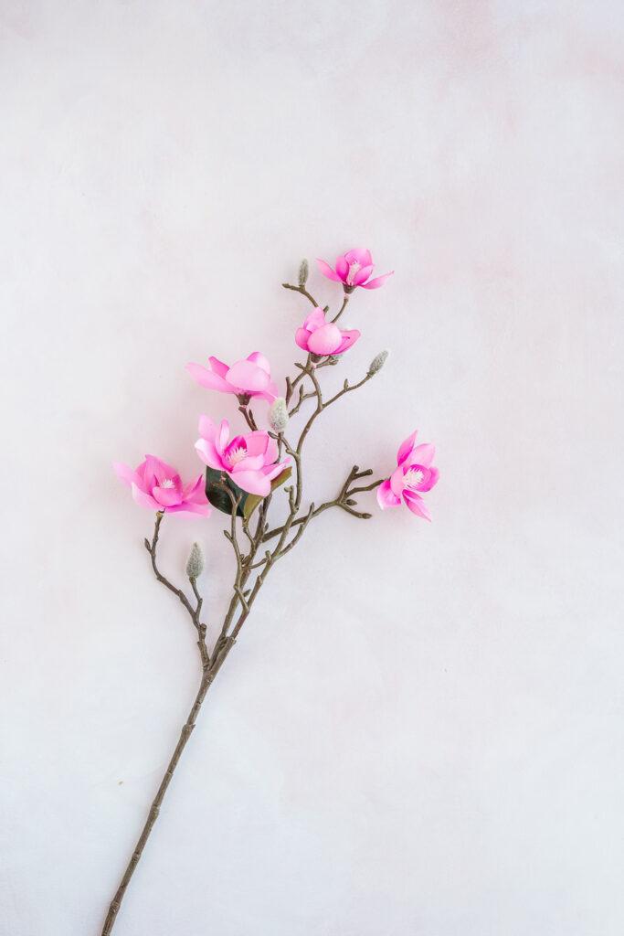 Magnolia stem from Michael's