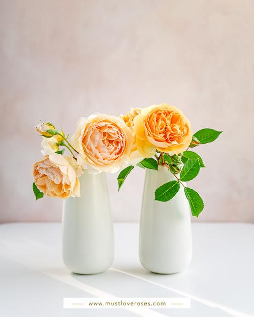 Best Lens for Flower Photography
