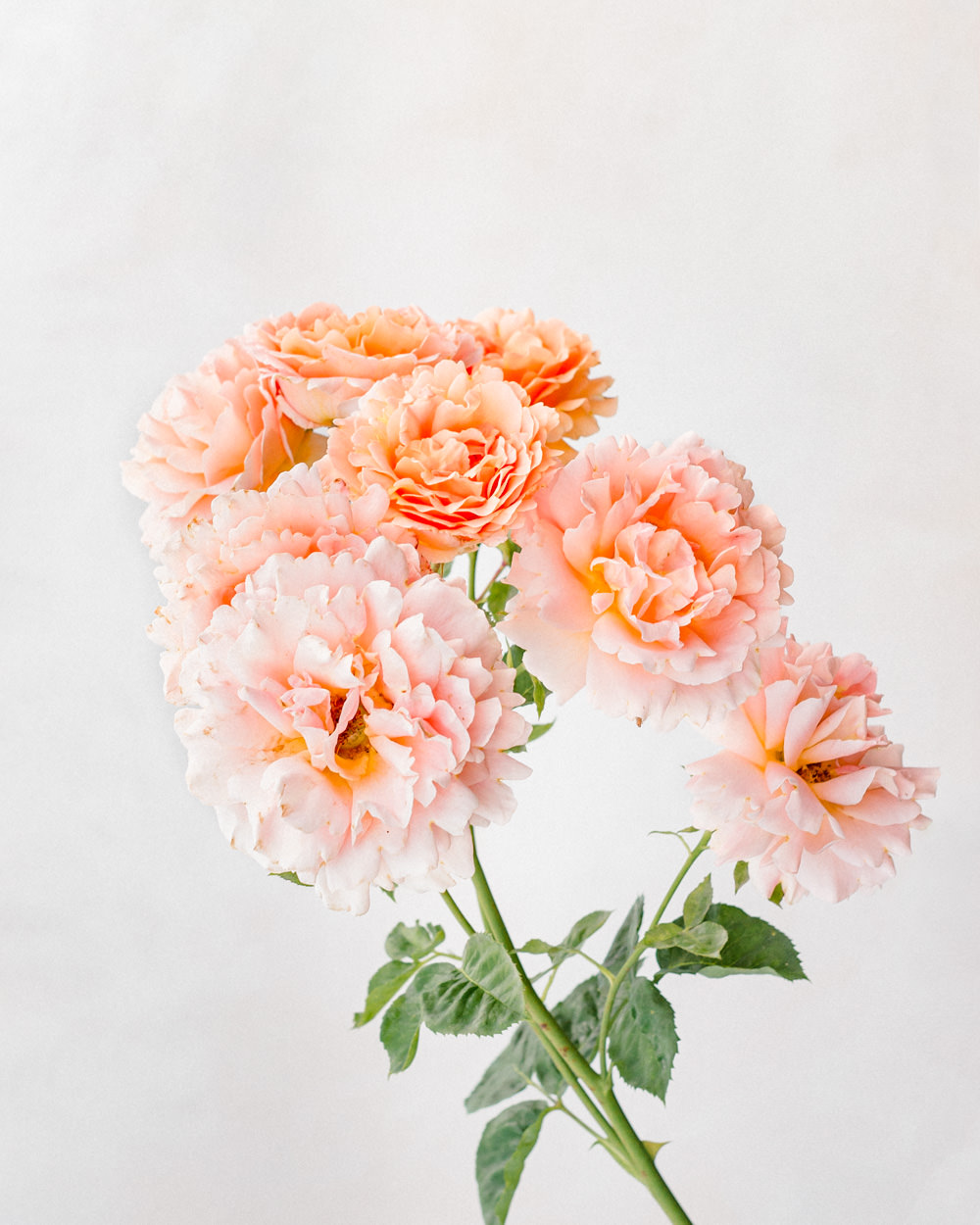 The Best Lenses for Flower Photography