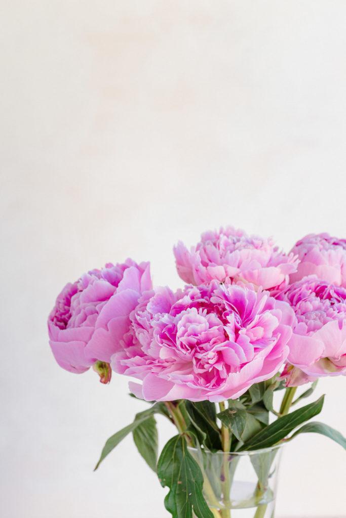 Flower Photography - Peonies