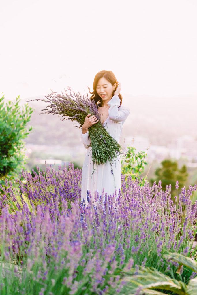 Harvesting garden lavender - How to Harvest and Dry Lavender