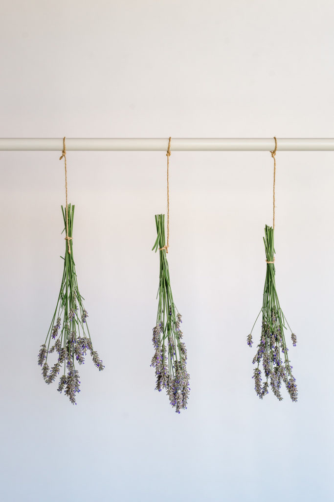 Bundles of lavender being dried - How to Harvest and Dry Lavender