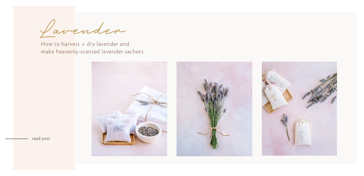 How to Harvest and Dry Lavender and Make Lavender Sachets