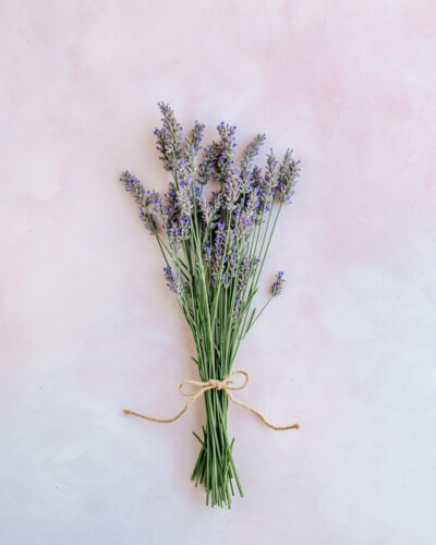 Bundle of lavender - How to Harvest and Dry Lavender
