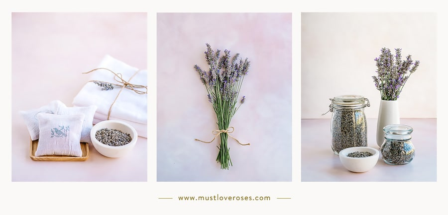 How to harvest and dry lavender photo collage