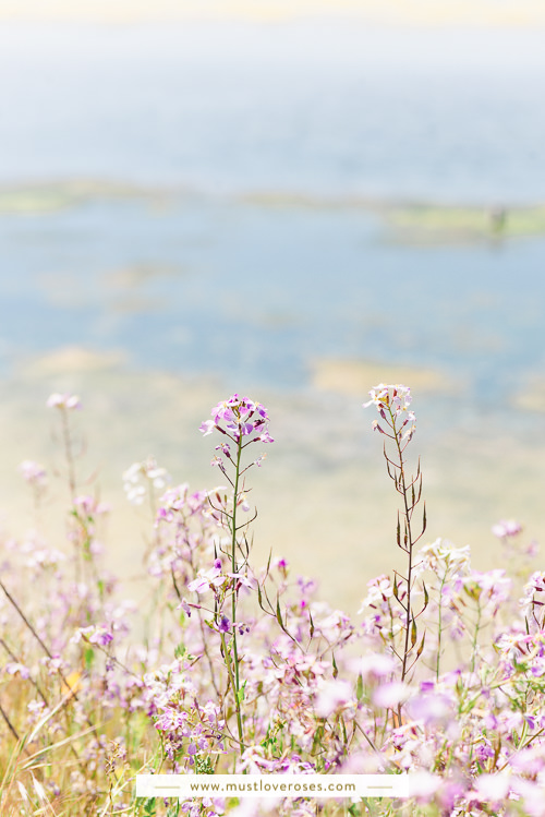 Bay Area Spring Wildflowers at Coyote Hills Regional Park