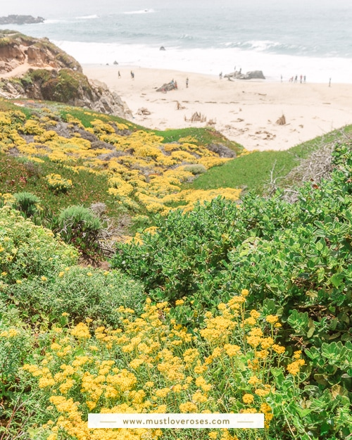 Spring wildflowers along the coast - Best Spots in Big Sur California