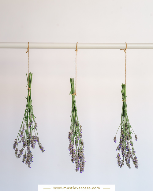 Drying lavender on a rack - How to Harvest and Dry Lavender