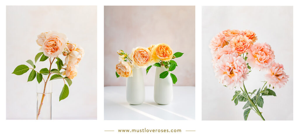 Flower Collage - Best Lens for Flower Photography