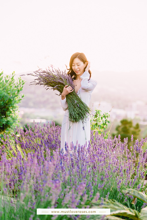 Backyard lavender plants - How to Harvest and Dry Lavender