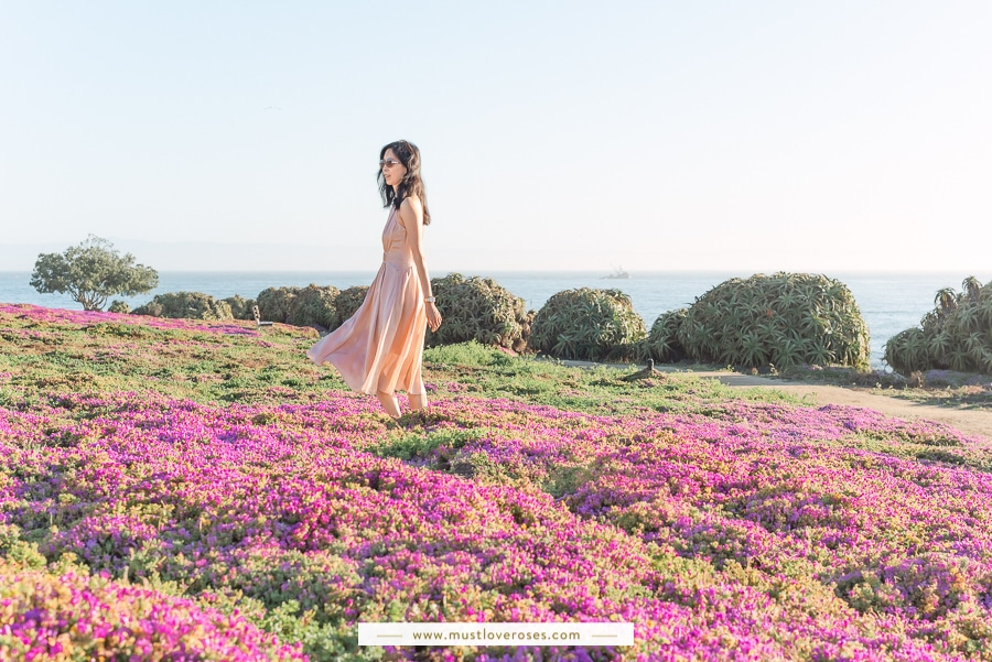 Pacific Grove Magic Purple Carpet