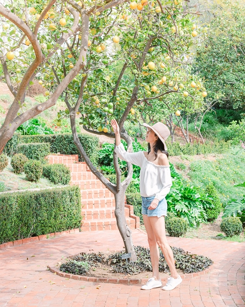 Visiting the Virginia Robinson Gardens in Beverly Hills California