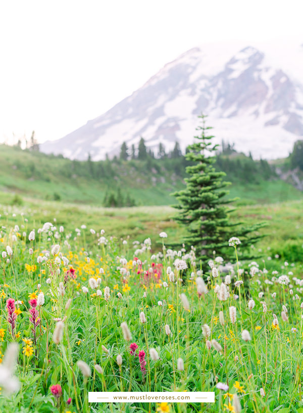 Summer wildflowers along Skyline Trail at Mt Rainier